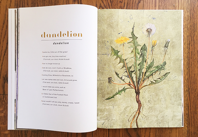 lost-words-dandelion-open-pages-blog-creativity-for-the-soul-blog