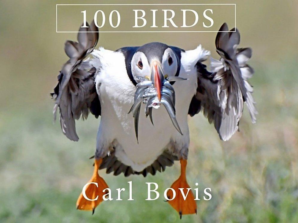 100 Birds - Cover